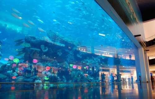 океанариум sea life bangkok ocean world в бангкоке